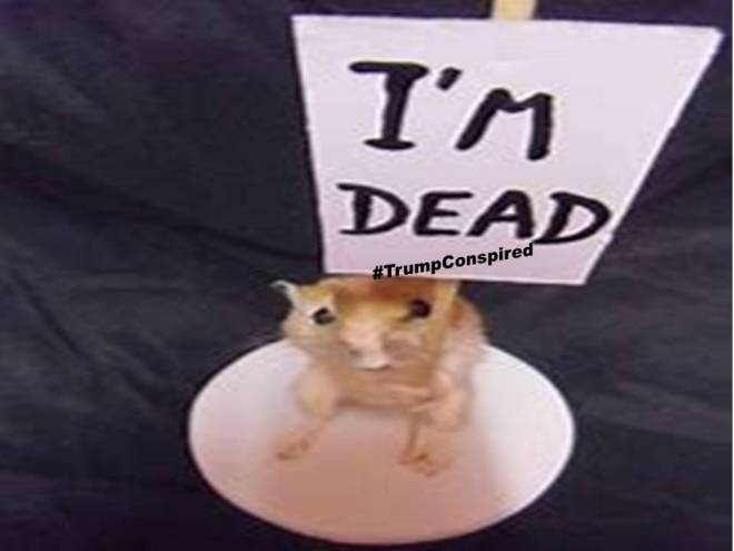 trumpconspired hamster