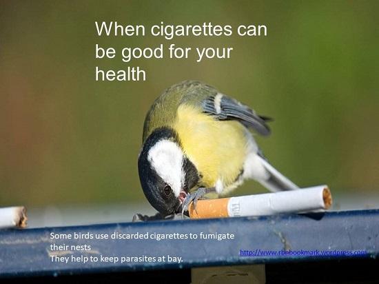 bird cigs